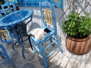 Amorgos cat