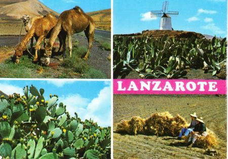 Lanzarote postcard 1983