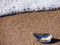 Shell on a Beach Portugal