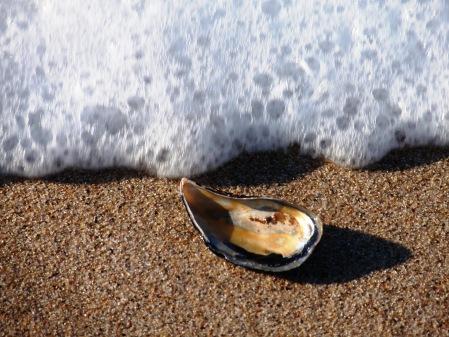 Pebble on a Beach Portugal
