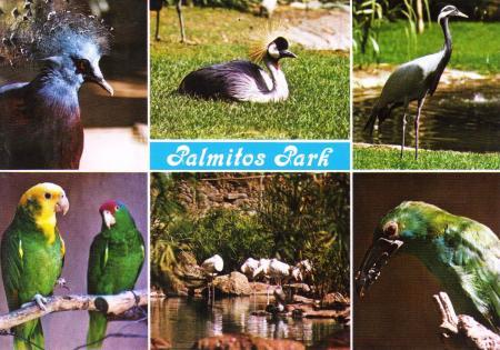 Gran Canaria Postcard Palmitos Park