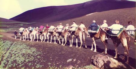 Camel Train Timanfaya Lanzarote