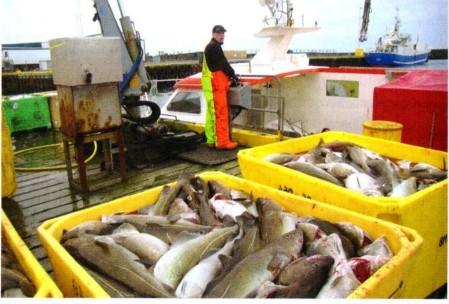 Icelandic Fisherman and catch