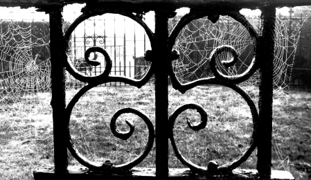 Gate with dew and webs