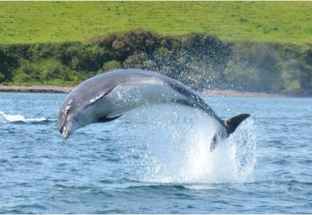 Funghi Dingle Dolphin