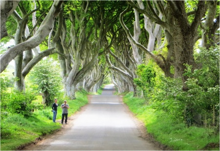 Dark Hedges 03