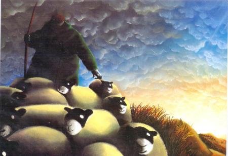 Wales Sheep Rain