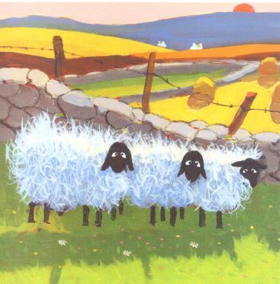 Wales Rain Sheep
