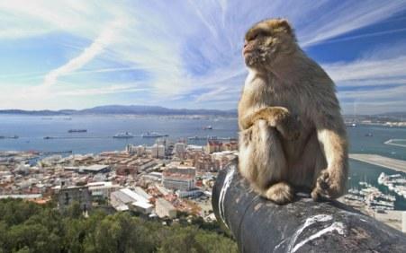 gibraltar-ape_1861379i