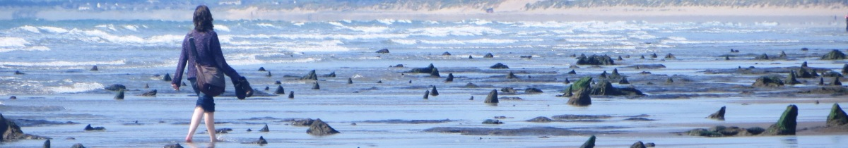 Wales - The Submerged Forest of Prehistoric Borth