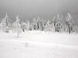 Black Forest Snow