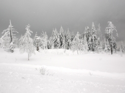 Black Forest Snow