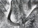 Black Forest Snow 05