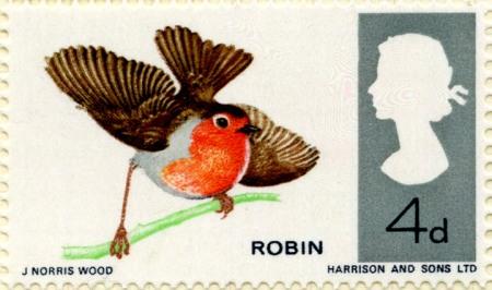 Birds of Britain The Robin