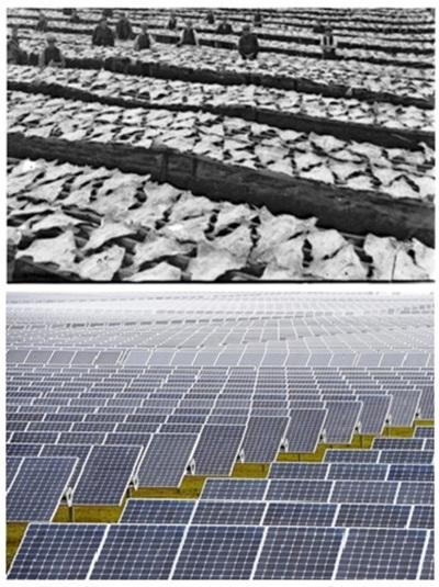 fish and solar