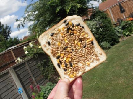 Lard Toast for Birds