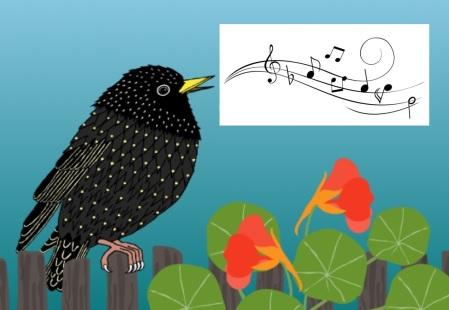Starling singing
