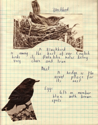 Dads Blackbird page