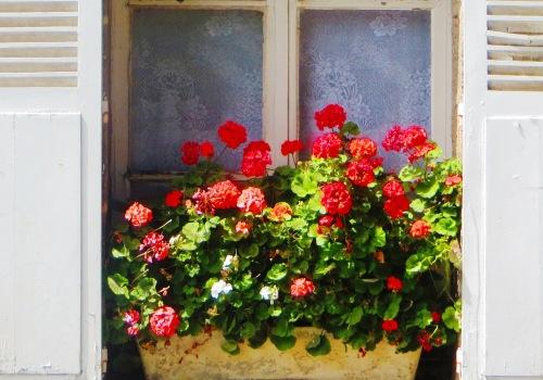 tricoloure window 2