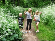 Sherwood Forest Imps