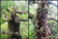 Spirits of Sherwood