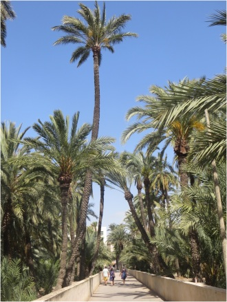 Elche Palm Orchard 3