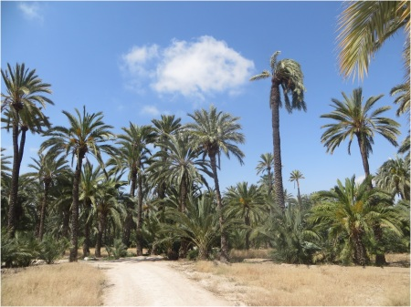 Elche Palm Orchard 4