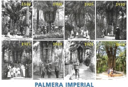 Palmera Elche