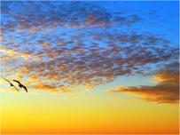 Kessingland Seagulls and Sunset