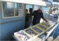 Rimini Fish Market