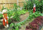 Garden today 02