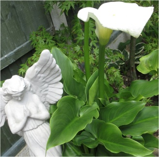 garden today 07