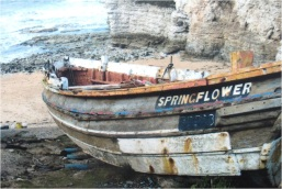 Flamborough Head Springflower