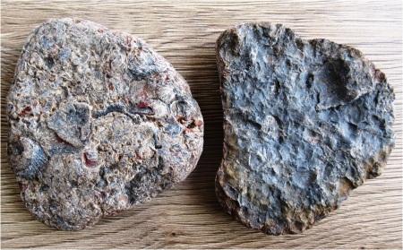 Skipsea Fossils
