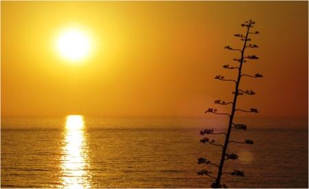 Odeceixa Sunset