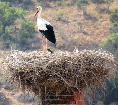 Silves Stork 01