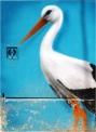 Silves Stork 02