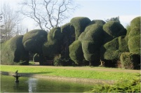 Ayscoughfee Hall Yew Trees