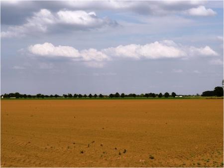 Fens Farmland