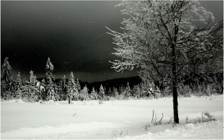 Black Forest Snow 02