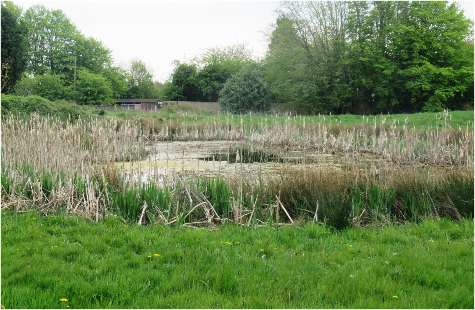 Old Watercress Beds 01