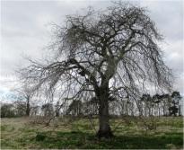 Tree oo8