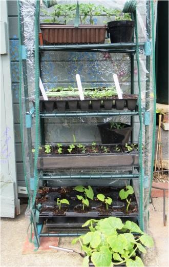 Greenhouse 02