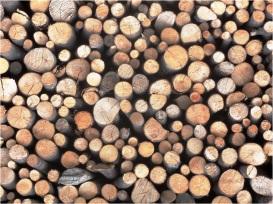 Hallstatt Woodpile 1