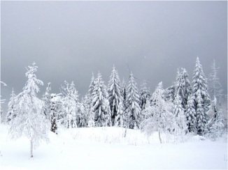 Black Forest Snow 08