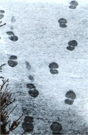 Posties Footprints