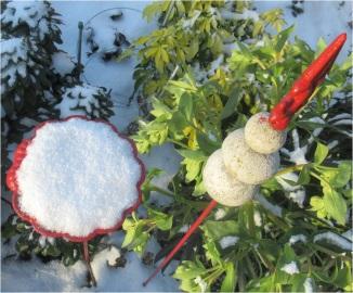 Snow Poppy 01