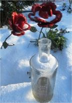 Snow Roses