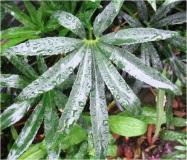 raindrops 7