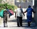 Amorgos Farmers